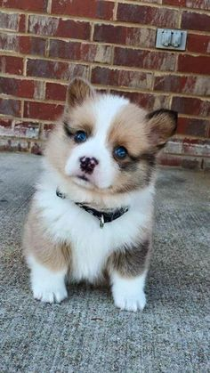 Top 5 cutest pupies ever