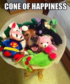 Cone of happiness!!!!!! LMAO!!