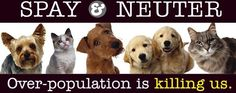 Over-population is killing us! This goes for humans too! Spay and neuter your children! haha, just kidding... maybe ;)
