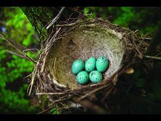 National Geographic Documentary- Amazing Animal Homes,how animals live,Nature Documentary 2016 - YouTube
