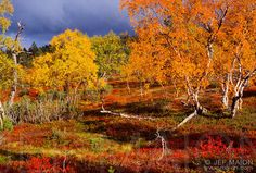 Ruska, autumn in Finland