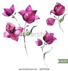 watercolor vector illustration of flower bougainvillea, pink flower, isolated object, polygons