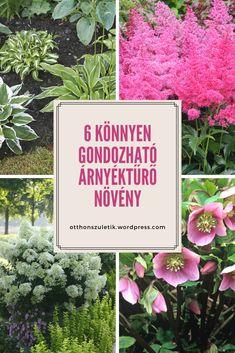 6 könnyen gondozható árnyéktűrő növény Flora Garden, Garden Design, Sweet Home, Home And Garden, Presents, Backyard, Green, Flowers, Decor