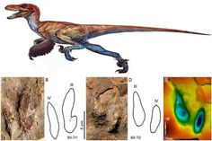 Two-toed dinosaur tracks reported from Iran.
