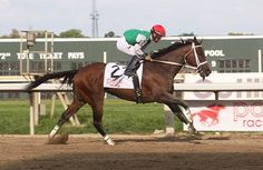 Longines Kentucky Oaks (gr. I) winner Cathryn Sophia will skip the Breeders' Cup, according to Mark Taylor of Taylor Made Sales Agency, which will offer the filly at the Fasig Tipton November sale.