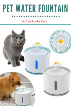 Cats struggle with sufficient levels of hydration, too. This product will fix the issue of drinking water well for pets and you don't have to think about not preparing drinking water for pets while you're busy with the job. This creative fountain inspires your pet to drink more water, with a fun concept keeping her safe and hydrated. Outdoor works also encourage pets to enjoy the sun. #petwaterfountain #catwaterfountain #bestpetsafewaterfountains #catwaterfountainstainlesssteel Cat Water Fountain, Drink More Water, Water Well, Enjoying The Sun, Pet Safe, Kitty Cats, Drinking Water, Concept, Pets