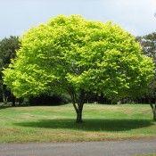 Rüya Tabirleri | Rüyada Ağaç Görmek