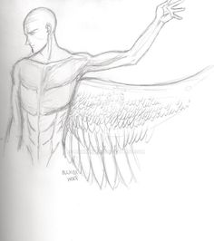 Human Avian Male: The Pectorals by MaximWolf Wing Anatomy, Wings, Deviantart, Aircraft, Feathers, Feather, Ali