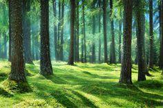 fantasy_forest_by_jeroenpaint-d6htcq3.jpg (900×596)