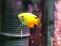 Find assorted live African Cichlids for sale at Live Fish Direct. Come see our selection of tropical fish. Tropical Aquarium, Tropical Fish, Aquarium Fish, Fish Aquariums, Two Fish, Live Fish, African Cichlids, Water Life, Exotic Fish
