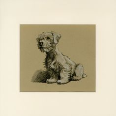 Sealyham Terrier by Cecil Aldin Vintage Dog Print - Mounted - Dog Sketch - Wall Art Print, Home Decor, Gift Idea for Dog Lover Sealyham Terrier, Cairn Terrier, Animal Drawings, Art Drawings, Drawing Animals, Drawing Designs, Arte Dachshund, Photo Images, Dog Illustration