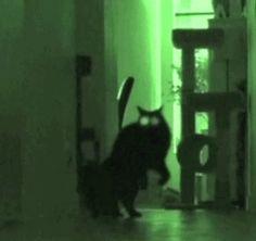 Fun | 20 bewijzen dat katten demonen zijn