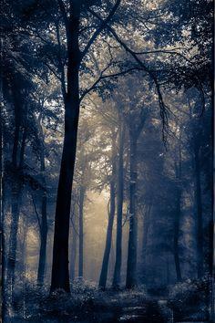 https://flic.kr/p/RhWEo2 | The Dark Forest