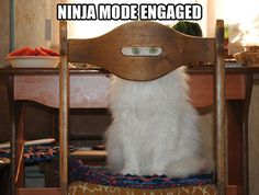 Ninja mode engaged…