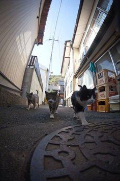 """15 fotos increíbles de """"La isla cielo de los gatos"""" en Japón"""