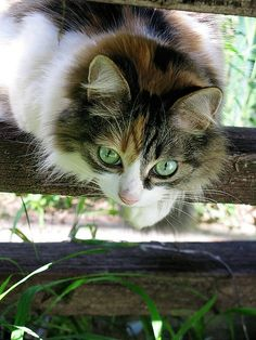 """pagewoman: """" source:pinterest.com Cats never strike a pose that isn't…"""