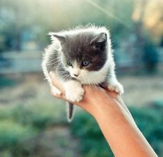 Cute Kitten Alert ! - Click to see loads of great pictures of cats and kittens to brighten your day.