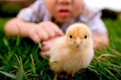 Should You Bring Home a Bunny or Baby Chick This Easter?