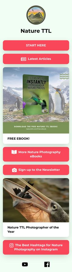 Nature Photos, Free Ebooks, Landing, Improve Yourself, Photographers, Nature Photography, Good Things, Instagram