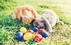 colorful easter eggs and bunny in the grass
