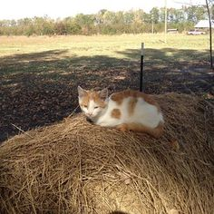 Making sure the hay's doing alright. | 19 Things Only Farm Cats Will Understand