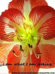 I am what I am seeking. #affirmation #flowers #photography