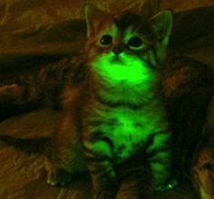 glow in the dark cats - Google Search