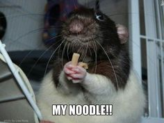 Nom--there is so love like a rat and their noodle.