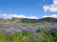 Island Tag 4