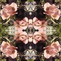 Photo by Amanda Bransgrove Amanda, Landscapes, Death, Bed, Flowers, Women, Fashion, Paisajes, Moda