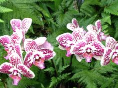 Orchids growing naturally I'm Hawaiian botanical garden #momentsinthegarden