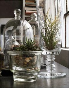 Glorious glass....whether it's a vase, a jar, a bottle or a cloche, possibly the household item that best combines both beauty and pr...