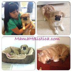 #Intenciones ~ #Miércoles Mudo / #WordlessWednesday : La Nueva Integrante de la #Family #MM #WW #mamaHolistica #puppy #mascota #pets