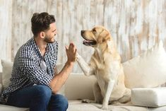 Earn money from pet sitting and pet boarding - Passive Income Anywhere Alter Computer, Pet Boarding, List Of Animals, Pet Dander, Best Dog Food, Pet Sitting, Pet Safe, Dog Hacks, Old Dogs