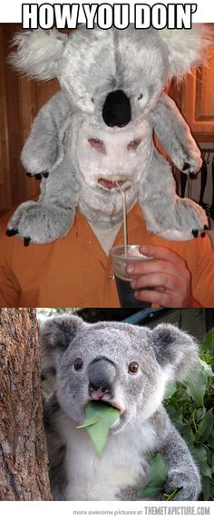 I see you are a Koala.  I too am a Koala