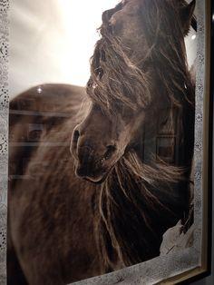 Roberto Dutesco gallery in Manhattan The wild horses of Sable Island