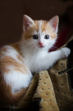 "cybergata: "" Bright-Eyed Kitteh """