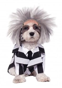 Beetlejuice Pet Costume Includes jacket with dickie and wig. This is an officially licensed Beetlejuice product. Occasion: Halloween Color: Black/White Material: Polyester Care Instruction: Hand Wash