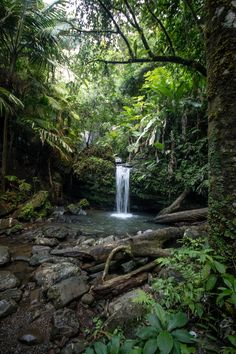 El Yunque Rainforest is a short drive from Rio Grande. You could hike, take a guided tour, see waterfalls and check out the observation deck. Beautiful World, Beautiful Places, Puerto Rico Trip, Rio Grande Puerto Rico, El Yunque Rainforest, El Yunque National Forest, Porto Rico, Paludarium, Vivarium