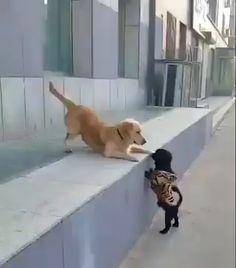 Dog gets his first kiss,dog GIFs Cute Animal Videos, Funny Animal Pictures, Funny Dog Videos, Funny Dogs, Funny Babies, Cute Funny Animals, Cute Baby Animals, Cute Puppies, Cute Dogs