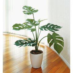 ■光触媒観葉植物テーブルタイプ(人工植物) モンステラ75は、お部屋のアクセントや空間に彩りを添え、空気をキレイにするはたらきで、快適さとやすらぎの空間造りをお手伝いします。 ■お誕生日・母の日・父の日・敬老の日・結婚記念日・出産祝・入社祝・入学祝・卒業祝・お見舞い・退職祝いなどの贈り物としても喜ばれております。