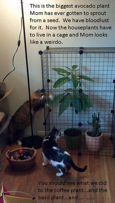 Cat-Shaming --- My favorite! Why did I never think of using a cage for plants! Cute Funny Animals, Funny Cute, The Funny, Cute Cats, Hilarious, Funny Kitties, Adorable Kittens, Funny Dogs, Crazy Cat Lady