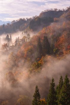 """etherealvistas: """"Somewhere in the Middle (Japan) by arcreyes [-ratamahatta-] Japan Nature, All Nature, Autumn Cozy, Autumn Forest, Autumn Morning, Autumn Aesthetic, Nature Aesthetic, Fog Photography, Landscape Photography"""