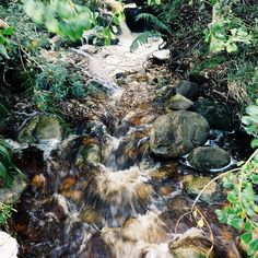 The rivers were raging in Kirstenbosch today after all the rain #lovecapetown
