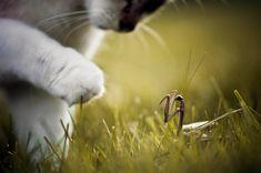 kitten vs mantis