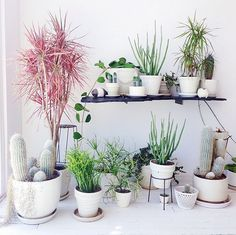 9 Gorgeous Ways to Decorate With Plants - The Nectar Collective