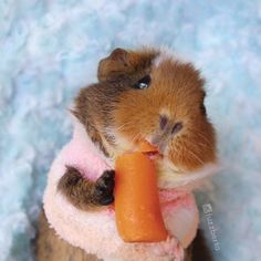 Tag someone you love as much as Fuzzberta loves this carrot!