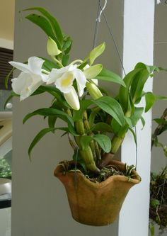 How To Keep Orchids Alive And Looking Gorgeous Exotic Plants, Exotic Flowers, Tropical Flowers, Tropical Plants, Beautiful Flowers, Orchid Planters, Orchids Garden, Cattleya Orchid, Dendrobium Orchids