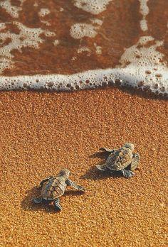 turtle, beach, and sea image Baby Animals Super Cute, Cute Little Animals, Cute Funny Animals, Baby Animals Pictures, Cute Animal Pictures, Cute Baby Turtles, Underwater Animals, Photo Animaliere, Animal Wallpaper