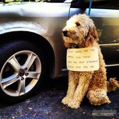 1000 images about dogs on pinterest goldendoodle With expensive dog toys